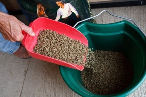 Change grain and hay gradually over the course of at least a week